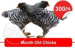 Chicks at Ksh 100