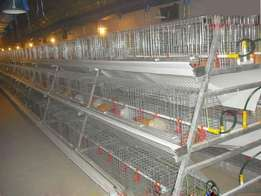 Battery cages for 2000birds on offer