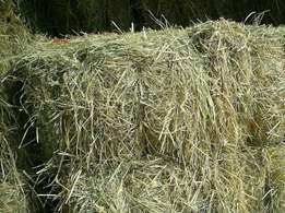 kikuyu & bhoma rhodes mixed grass hay,transport can be organized