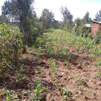 22 by 200 plot in Chemwa