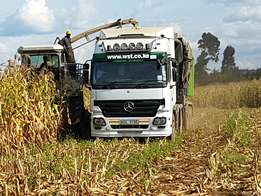 Maize foraging service