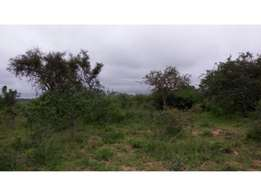 Prime Land on Sale 50 Acres- Kithuki ( Kathonzweni) Makueni County