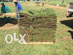 Turfland Grass(instant lawn) dressing, topsoil and compost manure