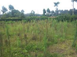 Kamirithu Limuru Residential plots for sale from 1.4 M