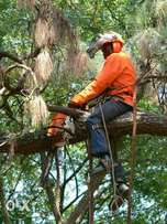proffetional tree felling & site clearance