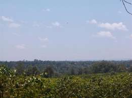 Kamagambo, Kirinyaga: 2 Acres prime farm at a coffee zone