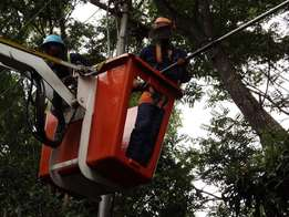 professional tree fellers and site clearing