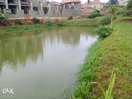 Fish pond for rent