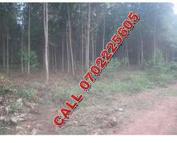 5 acres of Eucalyptus trees for sale in Mukono-Kawere at 50m each