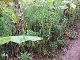 Fertile 400acres of millo land for sale in kiboga each is at 2.5m