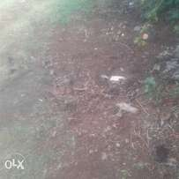 land for sale in kabati 1/4 acre