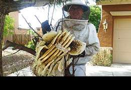 Bee n hive removal