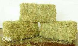 hay bales on sale for 200 per bale or 230 with transportation.