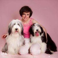 Luboń Psi Fryzjer Psi Hotel Szkolenie Strzyżenie Psów I Kotów Olx