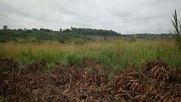 6 acres of land on sale