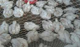 Live chickens for sale moderate price