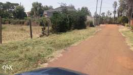 Front Plot at Kahawa sukari first avenue 100 by 100
