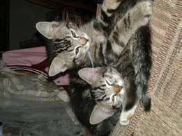 Kittens looking for lovely home