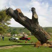 Tree Cutting & Felling Tips,Cutting Down a Tree - Tree Removal