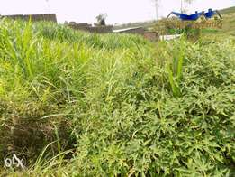 50x100 plot for sale in Ngoingwa Thika