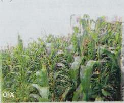 Plot on sale in Uasin Gishu County
