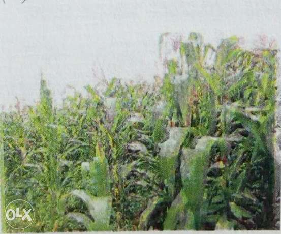 Plot on sale in Uasin Gishu County Biashara - image 1