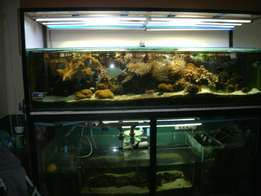 Marine fish tenk for sale