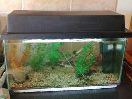 Fish tank with heater and filter for sale