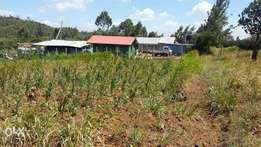 100 by 100 corner plot in Kikuyu Luthigiti