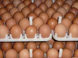 We have Fresh Brown and white fresh table eggs ready for supply.