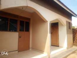 Executive double room is available for rent in kireka