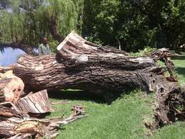 Fully insured tree fellers Mpumalanga