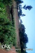 4 acres in chwele on sale