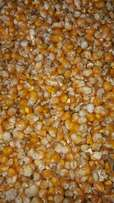 yellow and white maize for animal feed (geel en witmielies veevoer)