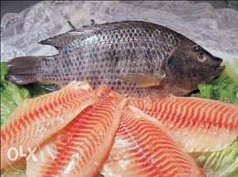 Fish fillet and Whole fish Wholesale