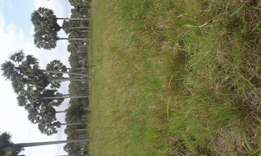 Land for sell kwale kidimu 68 acre 100per acre 500m from simoni raod .