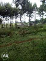 Redhill kabuku 2.5 acres for sale price 20m per acre