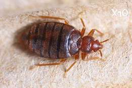 Fumigation Services/Bedbugs Ttreatment