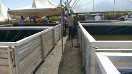 Fishpond project