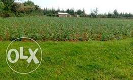 1acre land in kangaita