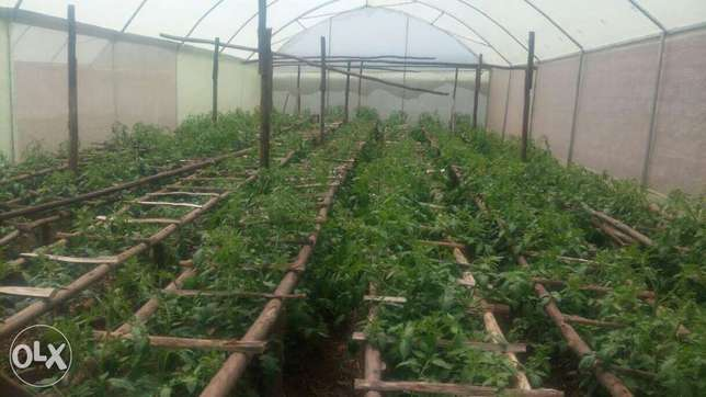 Greenhouses construction-Steel structured Ruai - image 2