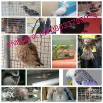 Exotic animals for sale