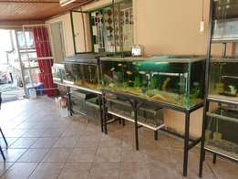 Fish and Tanks for sale