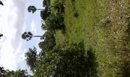 Land for sale 8 acre kwale majoreni 100k per acre