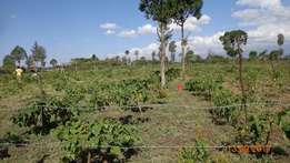 One acre of fruit orchard in Daiga area, 15 min drive from Nanyuki CBD