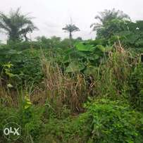 2 plots of land for lease