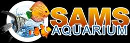 Sam's Aquarium - Largest Supplier of tropical Fish in Southern Suburbs
