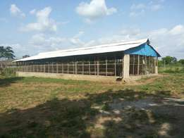 A poultry farm for sale