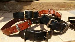 Dog accessories. Collars. Harness . Leather leashes