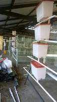 Poultry tech chicken cages
